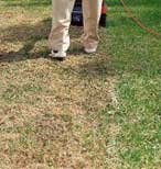 Elektrovertikutierer Pssst! Die Elektrovertikutierer von SABO vertikutieren besonders leise, arbeiten ebenso effizient uns sicher wie die SABO Benzinvertikutierer und eignen sich für Rasenflächen bis 800m².