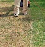 ohne lästiges Kabel befreien Sie auch größere Flächen schnell und einfach von Moos und Filz