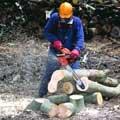 Motorsägen mit robuster Technik. Diese Motorsäge ist sehr gut für die Durchforstung im Stangen- und schwachen Baumholz und in mittelstarken Beständen geeignet.