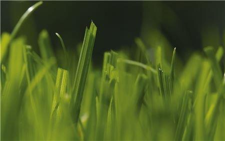 Ihr perfekt gemähter Traumrasen  Mit der Walzentechnik der handgeführten Rasenmäher ist ein akkurater kurzer Schnitt möglich, der den Rasen schont und für ein grüneres Endergebnis sorgt. Optimal geeignet für alle Perfektionisten, die von einem perfekt gepflegten englischen Rasen träumen.