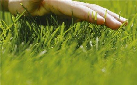 Umweltfreundliches Mähen ohne Emissionen  Der handgeführte Rasenmäher ist die natürliche Wahl für Ihren Garten. Leise und ohne schädliche Abgase zu produzieren, hält er Ihren Rasen das ganze Jahr über in einem grünen und bestens gepflegten Zustand.