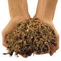 Kompostfertig: Kurz und faserig zerkleinerte Gartenabfälle verrotten in kürzester Zeit zu biologisch wertvollem Kompost.