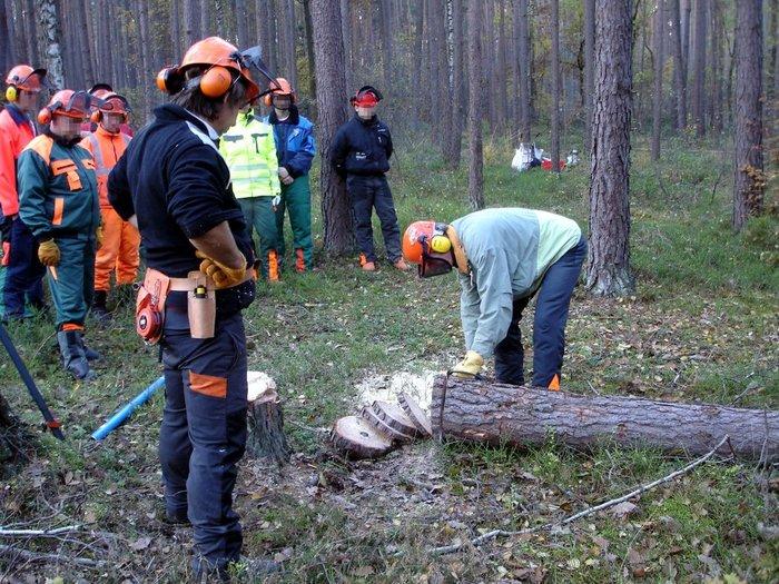 Motorsägen:                     SERVICE - Motorsägenlehrgang für Brennholzselbstwerber