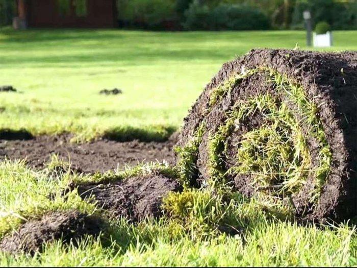 Nach dem Schneiden kann die Rasensode einfach zusammengerollt werden.